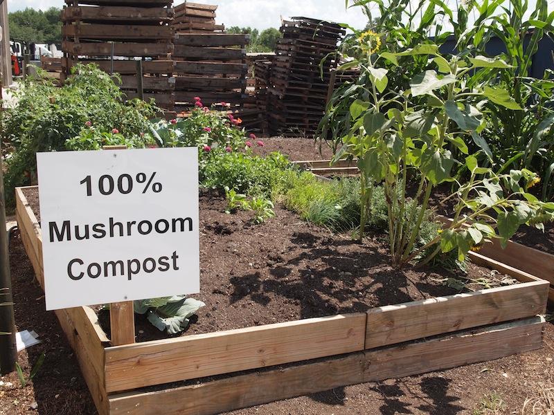 mushroom compost orlando florida